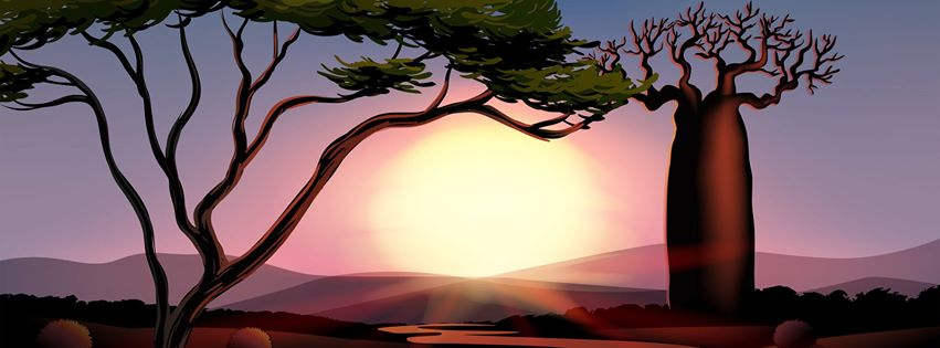 African trees and sunset